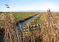 The Upton Marshes - geograph.org.uk - 1110306.jpg