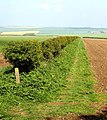 The Wolds' Way - geograph.org.uk - 1278475.jpg