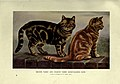 The book of the cat (Plate 8) (6263558366).jpg