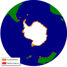 The distribution of the Adelie Penguin.png