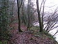The edge of Back Woods next to the River Exe, looking south on the Exe Valley way - geograph.org.uk - 1631748.jpg