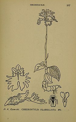 The flora of the Nilgiri and Pulney Hill-tops (1915) (14780767444).jpg