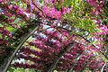 The flowers path, Southbank, Brisbane.JPG