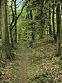The path through Miterdale Forest - geograph.org.uk - 796074.jpg
