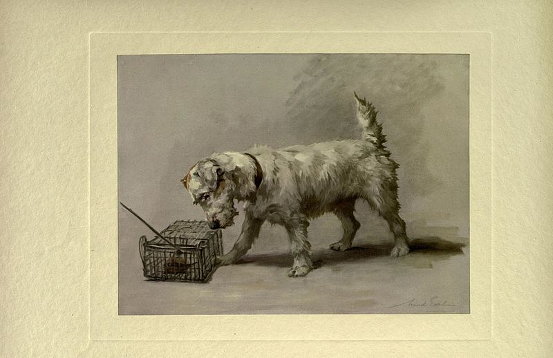 File:The power of the dog (Plate VIII) BHL22637135.jpg