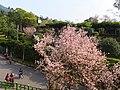 Tianyuan Temple 天元宮 - panoramio (8).jpg