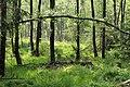 Torfmoor Hochsolling.jpg