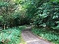 Track in Birch Copse, near The Warren - geograph.org.uk - 546074.jpg