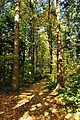 Trail on grounds of Weyerhaeuser Building (Federal Way) 02.jpg