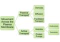 Transport Across the Plasma Membrane.png