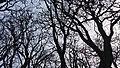 Tree at Agnisal, Patan, Lalitpur.jpg