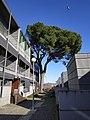 Tree in Guadalupe Braga.jpg