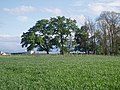 Trees and crops - geograph.org.uk - 430859.jpg