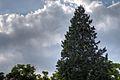 Trees at Valpre (18052242592).jpg