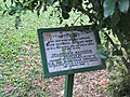 Trees planted by foreign dignitaries in the park of Jatiyo Smriti Soudho 02.jpg