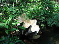 Tropical greenhouse 03.JPG