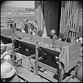 Tule Lake Relocation Center, Newell, California. Seed potato cutting at the cutting sheds of the Tu . . . - NARA - 537137.jpg