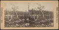 Two men, lakeside, from Robert N. Dennis collection of stereoscopic views.png