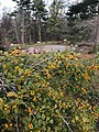 UUCCH Arboretum Labyrinth.jpg