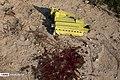 Ukraine Air Boeing 737 Crashes in Southern Tehran 2020-01-08 22.jpg