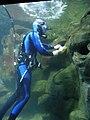 Underwater cleaner.jpg