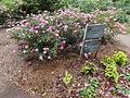 University of Georgia, Research and Education Garden flora 55.JPG
