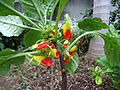 Unknown plant - Madeira - DSC07992.JPG