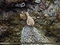 Unknown species (15707597680).jpg