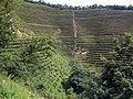 VM 5339 Muyu Tea plantations on valley slopes north of town.jpg