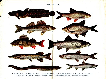 všetky ryby online dating