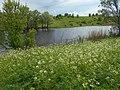 Verhuny, Poltavs'ka oblast, Ukraine - panoramio (116).jpg