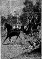Verne - P'tit-bonhomme, Hetzel, 1906, Ill. page 271.png