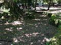 Villa Redenta. Spoleto. Il piccolo stagno.jpg