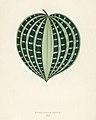 Vintage illustrations by Benjamin Fawcett for Shirley Hibberd digitally enhanced by rawpixel 3.jpg