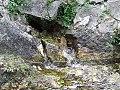 Visit a Fonti dei Clitunno 13.jpg