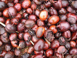 Vitellaria - Shea nuts