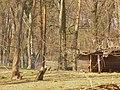 Volkspark Rehberge - Tieregehege - geo.hlipp.de - 35002.jpg