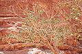Wadi Rum - Jordanie 07-2012 (7631293536).jpg