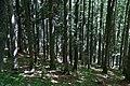 Wald oberhalb Feldsee - geo.hlipp.de - 32320.jpg