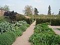 Walled Garden at Hampton Court - geograph.org.uk - 467369.jpg