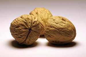Juglans - Persian walnut (Juglans regia) seeds