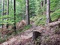 Wanderweg - panoramio (70).jpg