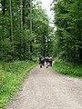 Wanderweg bei Weltenburg - geo.hlipp.de - 26046.jpg