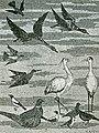 "Wandmosaik ""Tierbilder"" Vögel.jpg"