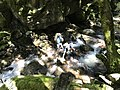 Wangapeka Track - Crossing an unbridged creek.jpg