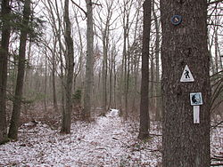 Warner Trail, Moose Hill Wildlife Sanctuary, Sharon MA.jpg