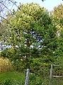 Wawa pomnik przyr 345 1.JPG