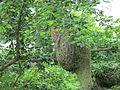 Weaver bird nest making.jpg