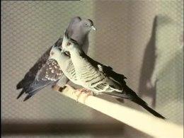 Bestand:Wereld vogeltentoonstelling-515070.ogv