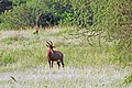 Western Serengeti 2012 06 03 3923 (7557787464).jpg